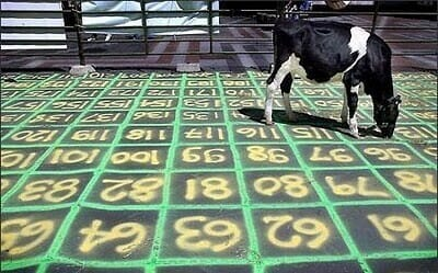 Cow chip bingo fundraising event