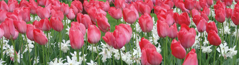 Flower Bulb Fundraiser