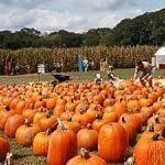 Halloween Pumpkin Fundraiser
