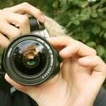 Photography Fundraiser
