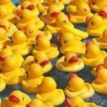 Rubber Duck Fundraiser