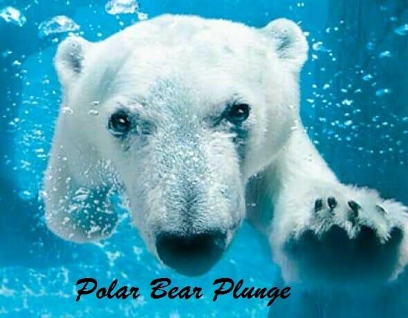 Polar bear plunge raises big bucks
