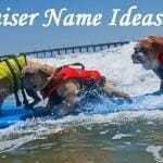 Pet Fundraiser Name Ideas