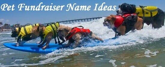 pet fundraiser name ideas
