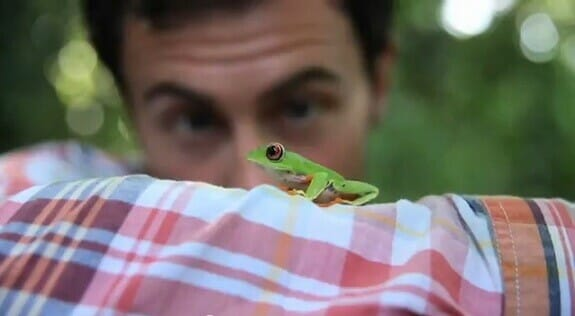 Save the rainforest - Follow the frog